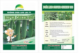Dưa Leo Lai F1 - Super Green 999